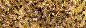 Wie Machen Bienen Honig : honig bienen ~ Whattoseeinmadrid.com Haus und Dekorationen