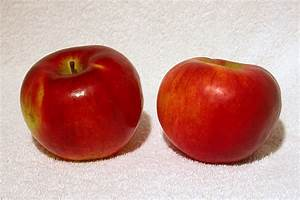 Cortland (apple) - Wikipedia