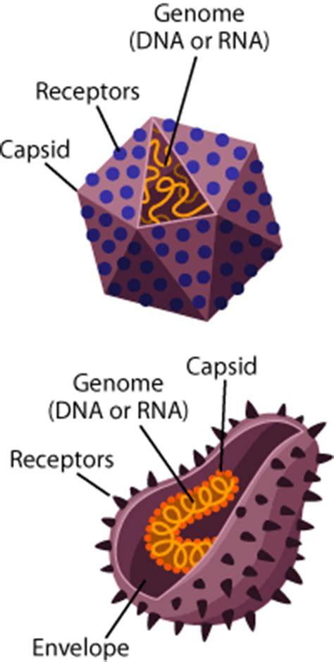 What Does Virus Look Like