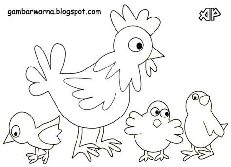 Mewarnai Ayam Belajar Mewarnai Gambar