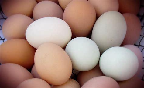shelf of eggs how to eggs for longer shelf modern survival