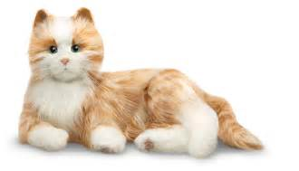 picture of cat from robots companion cats and dogs for seniors