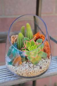 Sukkulenten Im Glas Pflanzen : mini succulent terrarium w coral kaktus pflanzen sukkulenten und garten ~ Eleganceandgraceweddings.com Haus und Dekorationen