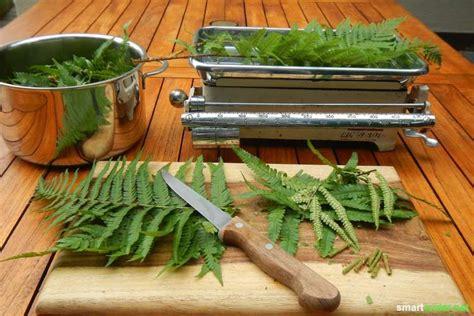 16 Natürliche Mittel Gegen Blattläuse, Schildläuse