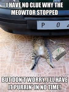 cat vehicle cat working car meme the news wheel
