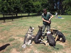 dog trainer courses open dog training business With dog training courses