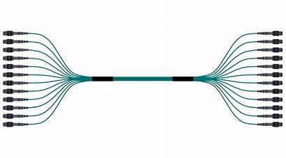 Fiber Patch Assembly Breakout Cord Samm Optics