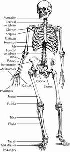 Know The Name Of Every Bone In The Human Body