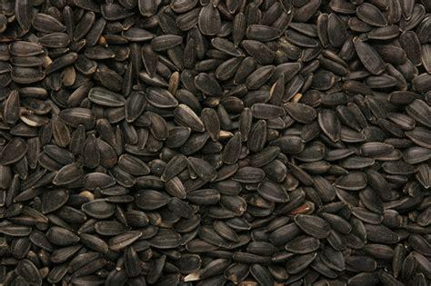 sunflower seed black gladwells