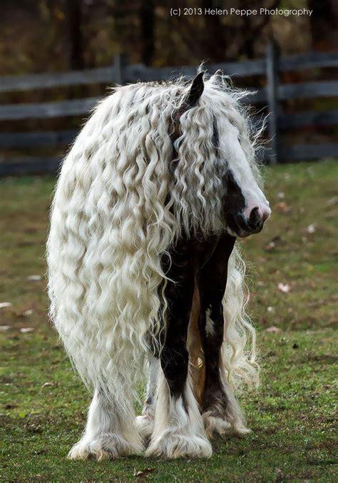 animales  tienen el cabello super cuidado
