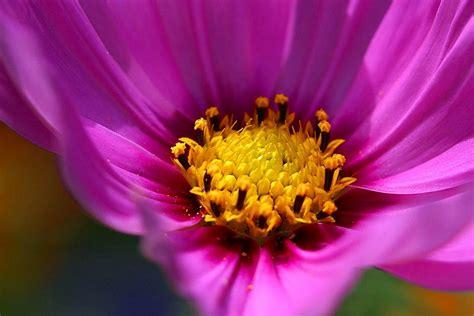 fileplants flowers macro photographyjpg wikimedia commons