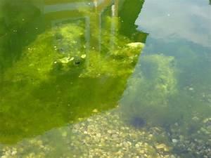 Algen Im Gartenteich : gartenteich algen algen im gartenteich tipps zur algen ~ Michelbontemps.com Haus und Dekorationen