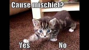 20 Best Of Funny Cat Pictures Sayings | Kittens cute ...