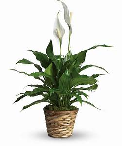 Low-Light Indoor Plants You Can Decorate With!