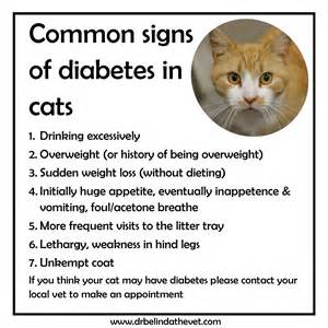 diabetes in cats study why is machi still growing at age 9 dr