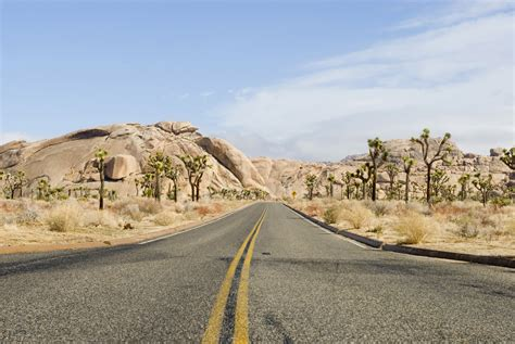 Joshua Tree Ca Pictures Posters News And Videos On
