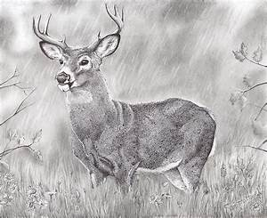 This is a drawing of a whitetail buck by Samantha Howell ...