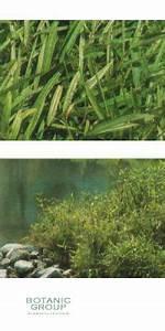 Bambus Pflege Zimmerpflanze : pleioblastus chino elegantissimus pflanzenversand pflanzenhandel pflanzen pflanzgef e ~ Frokenaadalensverden.com Haus und Dekorationen