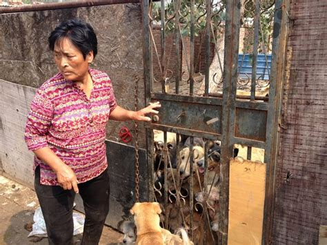 animal rights groups  china accuse yulin dog rescuer