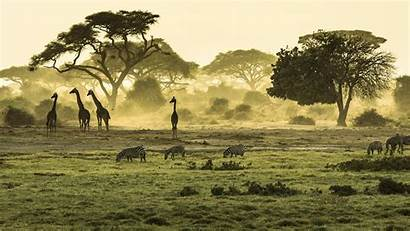 Africa East Safari Afrika Kenya Tanzania Kenia