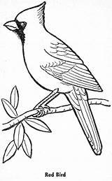 Cardinal Coloring Drawings 65kb 1600px sketch template
