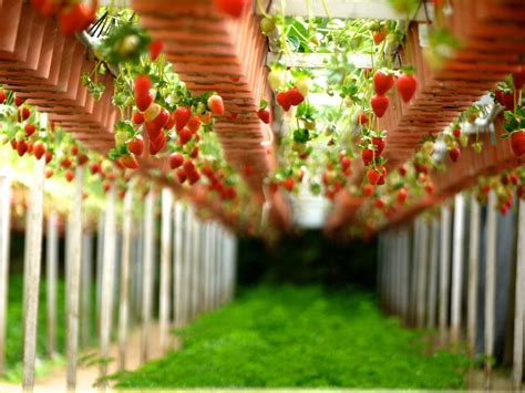 Vertical Gardening Strawberries by Plants Ideal For Vertical Gardening
