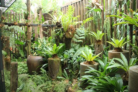 garden plants garden tips fern plants interior design inspiration