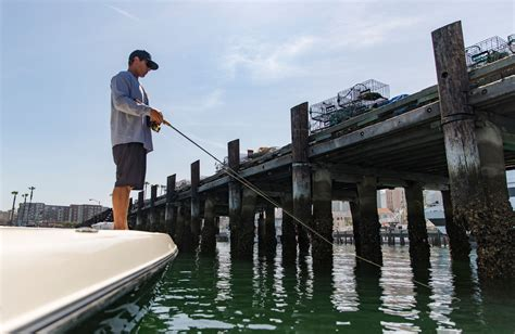 Charter Boat Fishing San Diego by San Diego Bay Inshore Fishing Charters Risen Tide