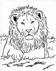 Lion Face Drawing Color