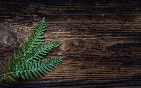 fern wallpaper   abstract wallpaper