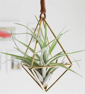 Himmeli Diamond Air Plant Ornament from Scoutmob Things