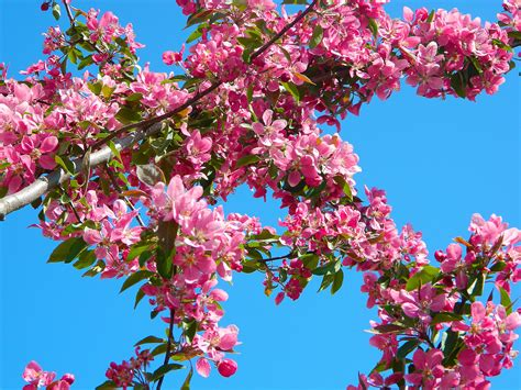 Free Images : tree nature branch flower spring