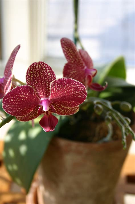 orchids temperature the orchid greenhouse choosing the right plant s by roger marshall
