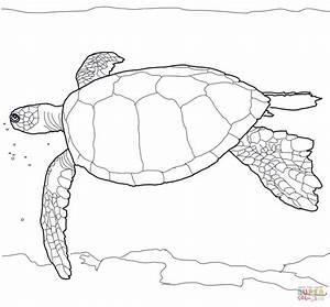 Hawaiian Green Sea Turtle Coloring Page Free Printable