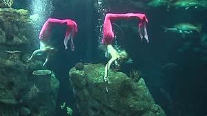 Weeki Wachee mermaids return to SC Aquarium | News ...