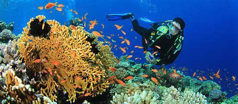 pathologies de la plong 233 e sous marine en guadeloupe