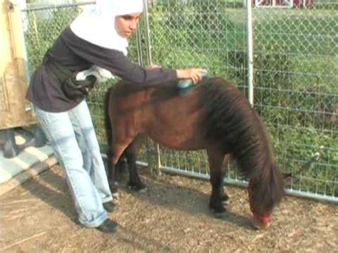 chicago  pony guia  una ciega musulmana youtube