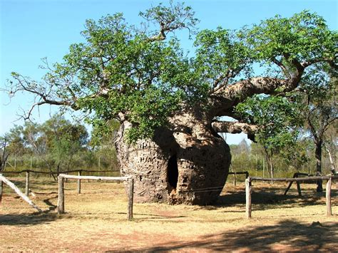 net tree 10 amazing stories about 10 trees toptenz net