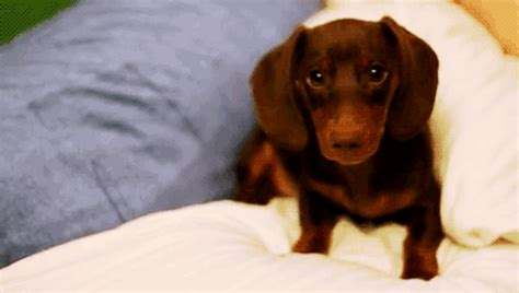 adorable animated puppy gifs  animations