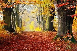 Your Autumn Survival Guide
