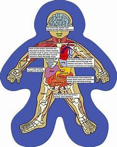 Human Body Diagram For Kids Human Body Diagram For Kids