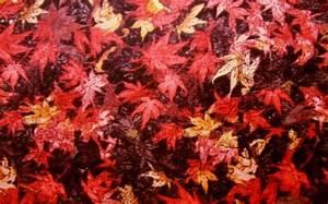 Stoffe Günstig Kaufen : patchworkstoffe patchwork stoffe g nstig online kaufen ~ Orissabook.com Haus und Dekorationen