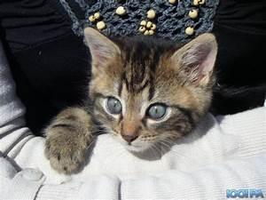 Petite Annonce Bretagne : donne chaton petite annonce chat vigneux de bretagne loire atlantique 44 1001 petites ~ Accommodationitalianriviera.info Avis de Voitures