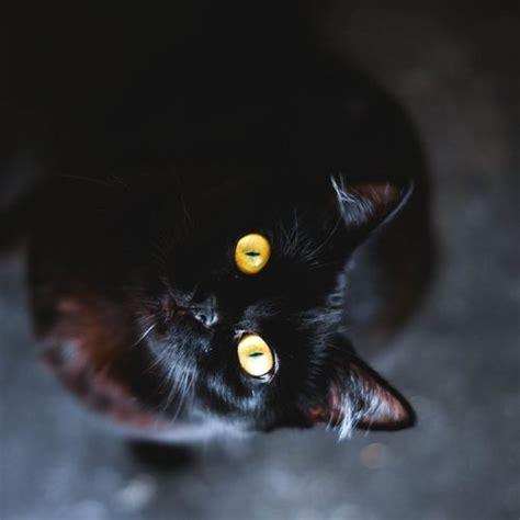 Black Cat Screensavers And Wallpaper