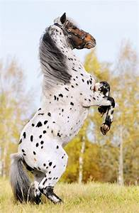 The most beautiful horses in the world! | Pets Lovers