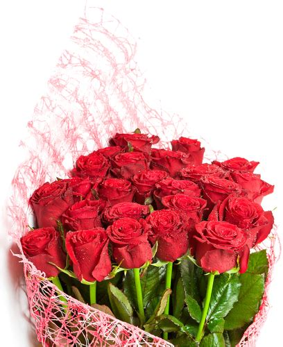 galateo dei fiori galateo dei fiori e il giusto linguaggio dei pensieri