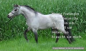 sprüche pferde wiesen sprüche bilder sprueche net