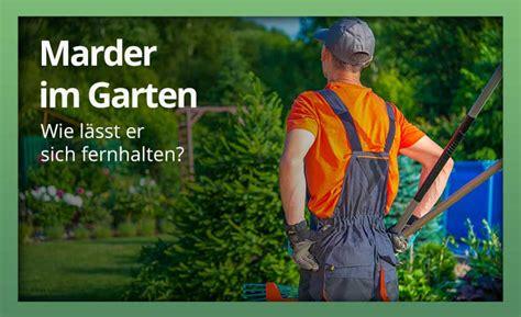 Marder Im Garten » Womit Am Besten Abwehren Und Vertreiben?