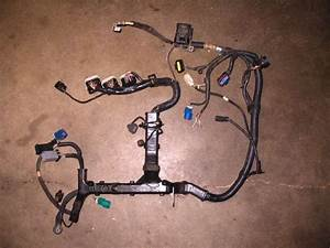 Purchase 05 Ford Escape 3 0l Engine Wire Harness Motorcycle In Belleville  Michigan  Us  For Us