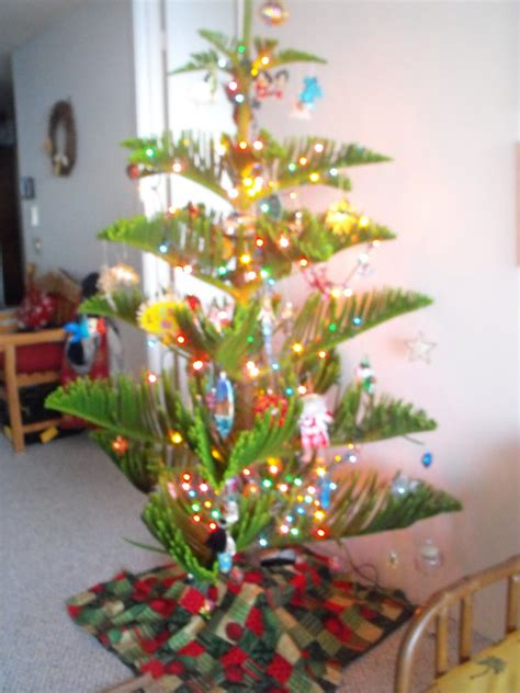 liz living life in hawaii hawaiian christmas tree